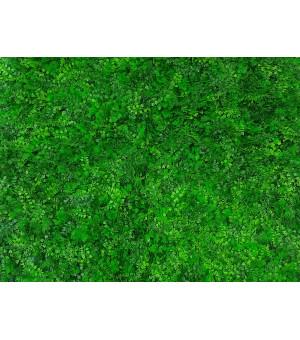 Mur Végétal Artificiel Fougère 1m x 1m