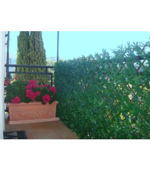 Treillis Extensible vigne vierge