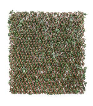 Brise vue Treillis Extensible  vigne vierge 1 x 2 M